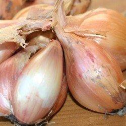 Egyptian Tree Onions Richard Watson. (2)