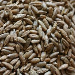 Joseph's rye 25.8.10 021