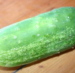 deka cucumer eating fresh stage