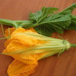kamokamo tips and male flowers