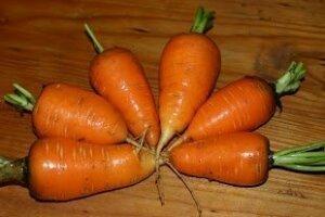 oxheart carrots