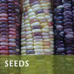 Seeds & Growing Nutrient Dense Food