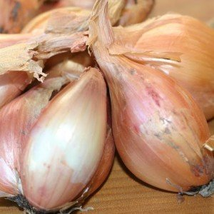 Tree Onions Gerald de Koning