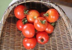 Tomato Tommy Toe