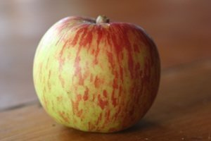Apple- Giant Geniton- MM106 R/S