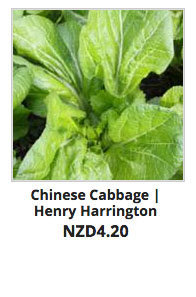 Recommended_Seeds_Chinese_Cabbage_HH
