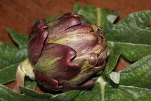 artichoke purple de jesi