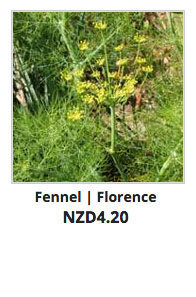 Recommended_Seeds_Fennel_Florence