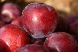 Little John Plum Trees have a red flesh and outstanding flavour. Ripe for picking early February.