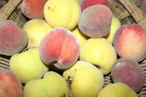Matakohe Peach Tree- yellow peach, buttery and amazingly sweet!