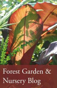 Forest_garden_blog3