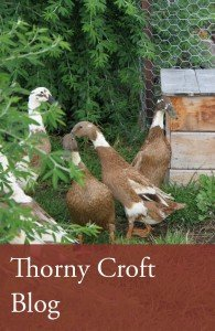 Thorny_croft