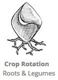 Crop_Rotation_Roots_and_Legumes