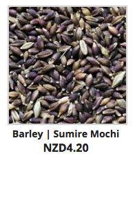 Growing Out Rare Barley Lines | Koanga Institute