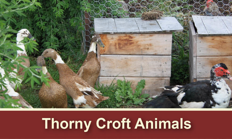 Thorny Croft Blog