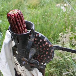 Corn_Bloody_Butcher2