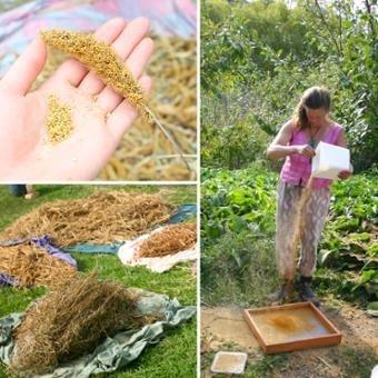 Bioregional_seed_internship